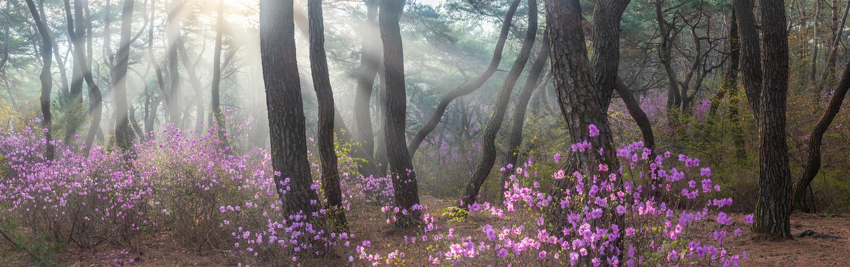 The early april samreung by jaeyoun Ryu