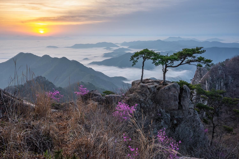 Couple pine on the rock by jaeyoun Ryu
