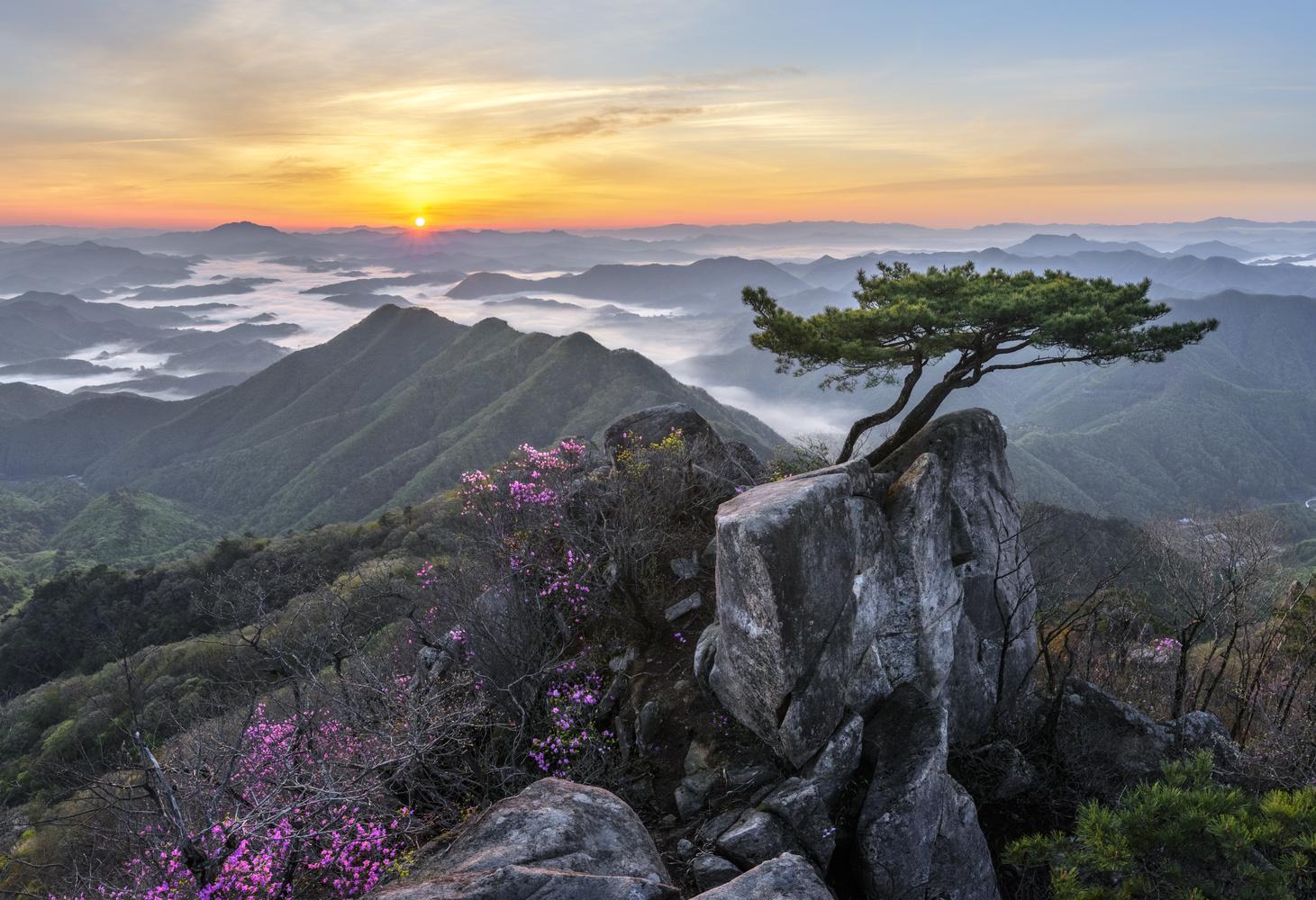 Pine tree growing between rocks by jaeyoun Ryu