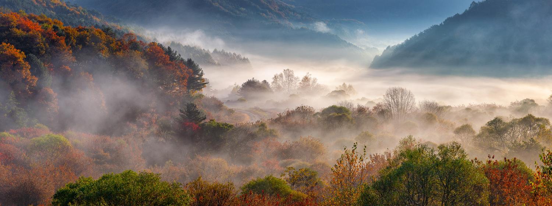 Misty forest by jaeyoun Ryu