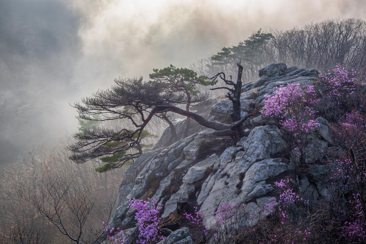 Life and death by jaeyoun Ryu