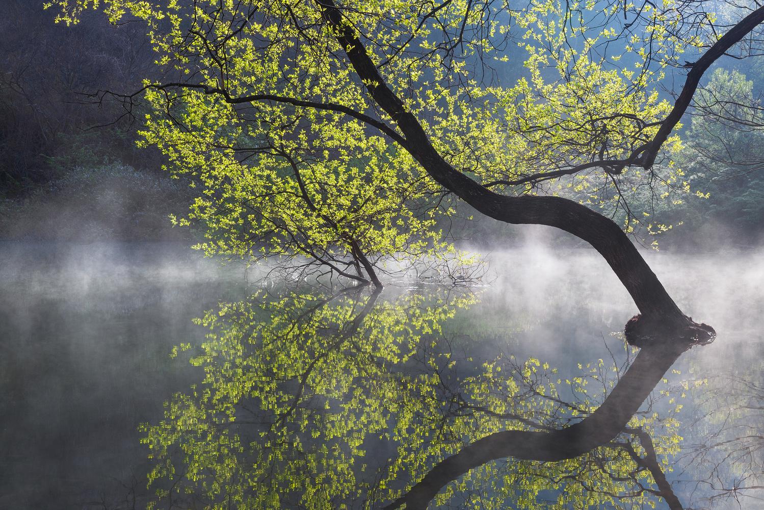Light green by jaeyoun Ryu