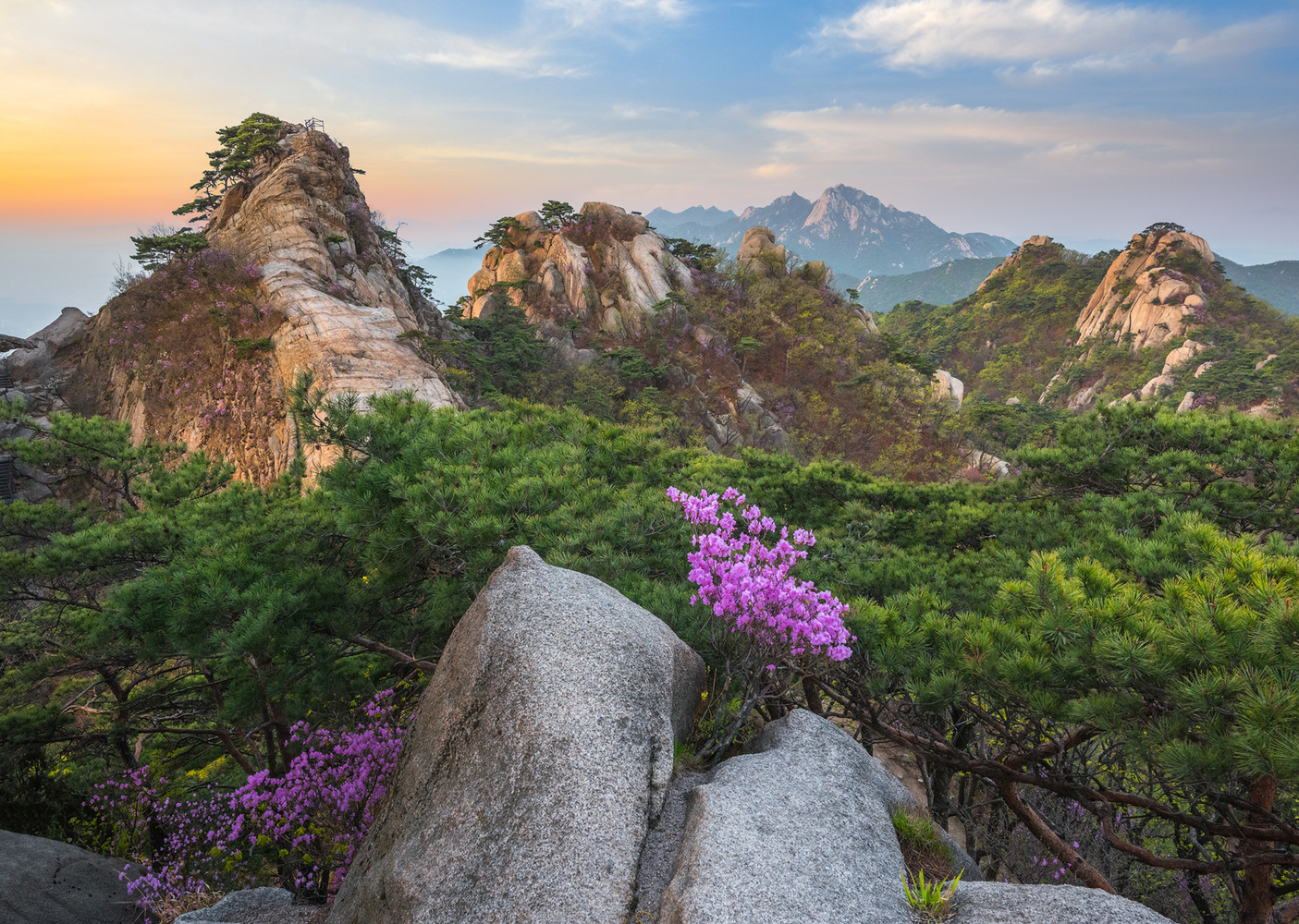 Flowers blooming on the rocks by jaeyoun Ryu
