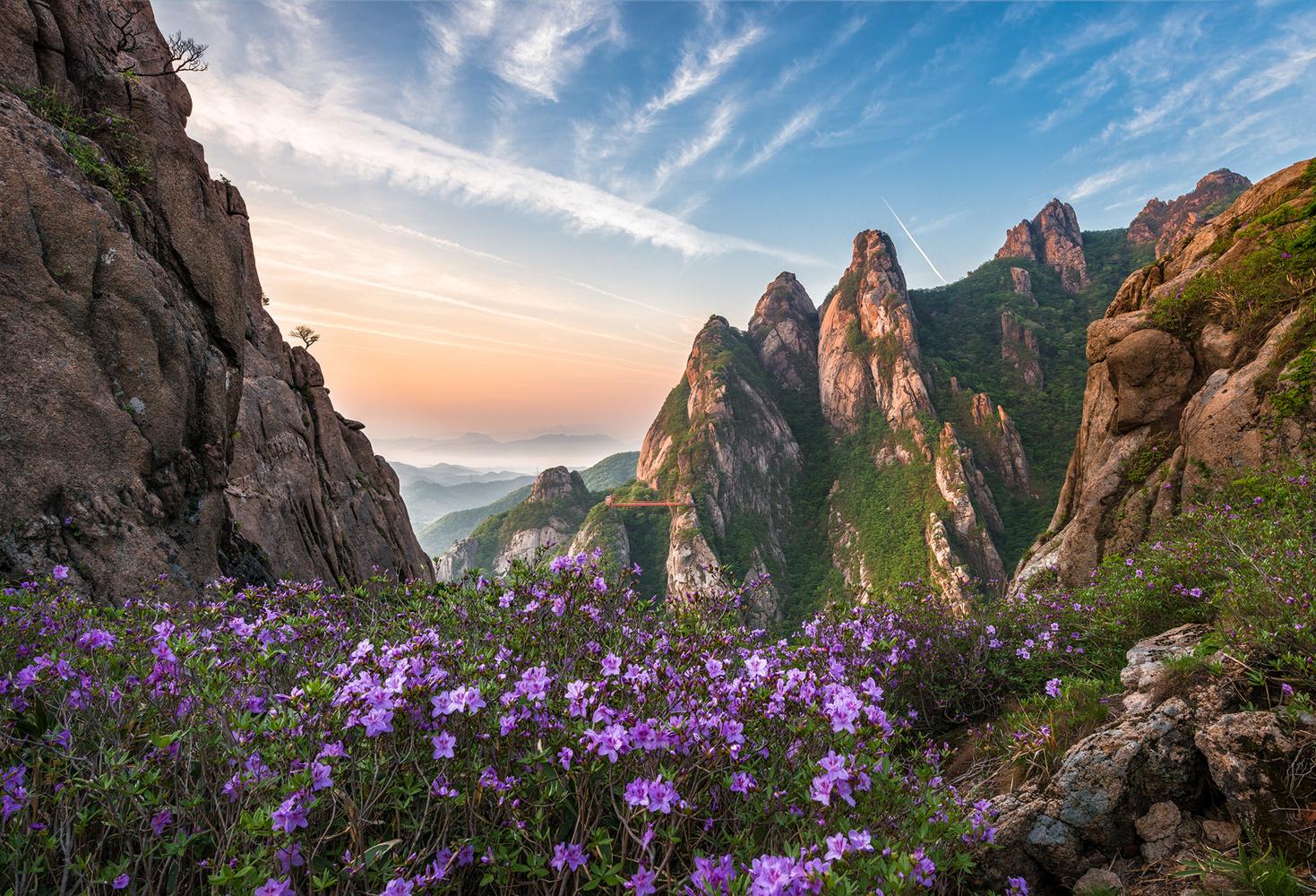 Flowering mountains by jaeyoun Ryu