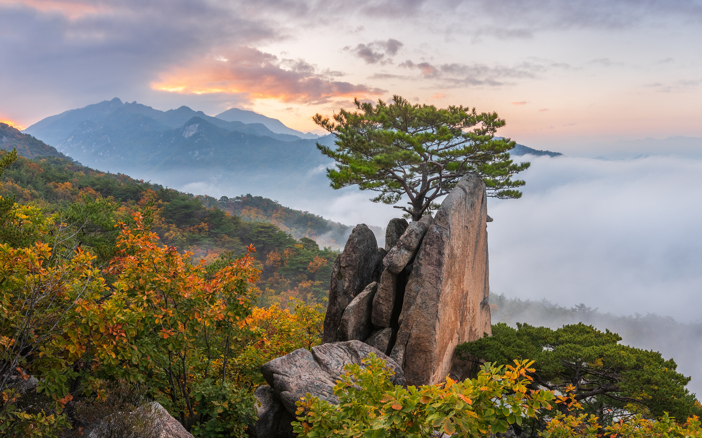 Tree on a rock by jaeyoun Ryu