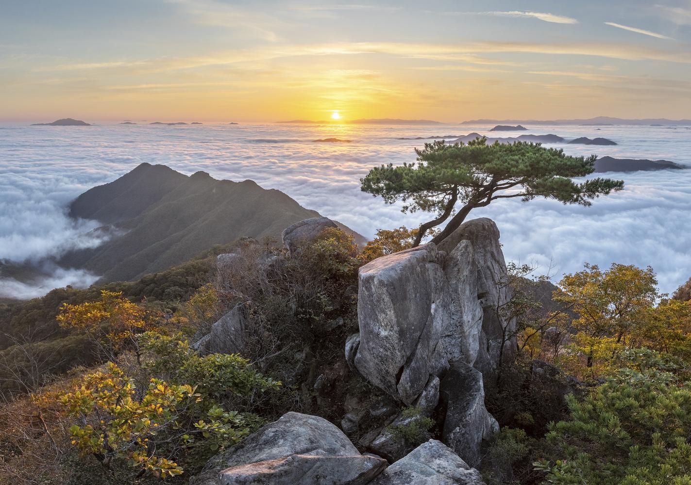 Greeting Pine by jaeyoun Ryu