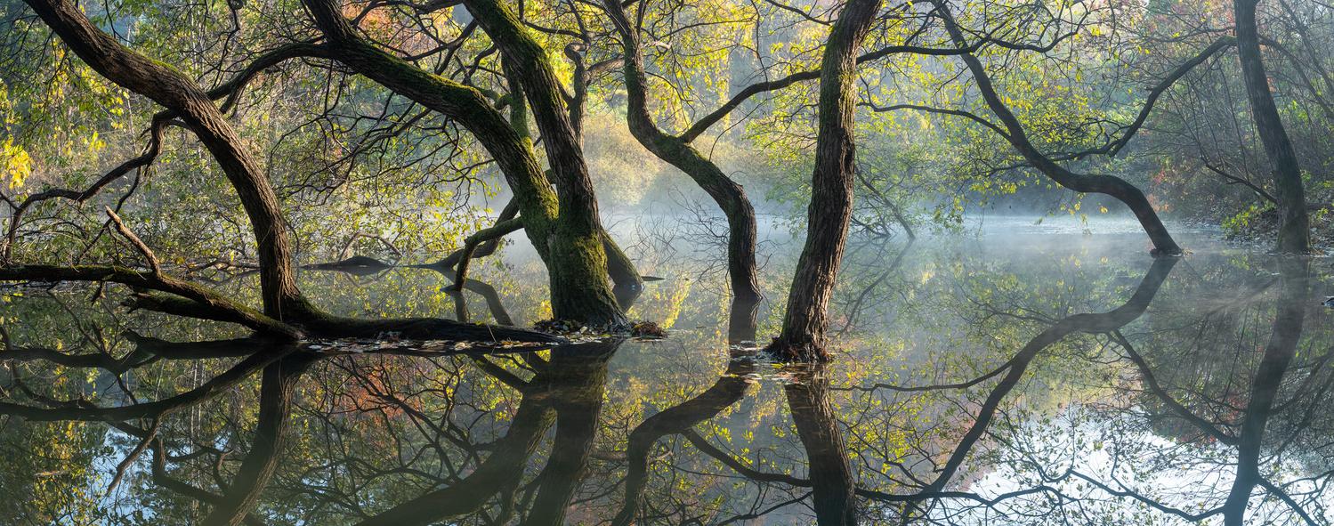 Morning light of autumn by jaeyoun Ryu