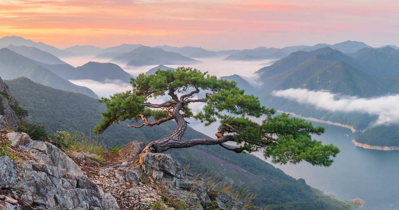 Celebrity tree by jaeyoun Ryu