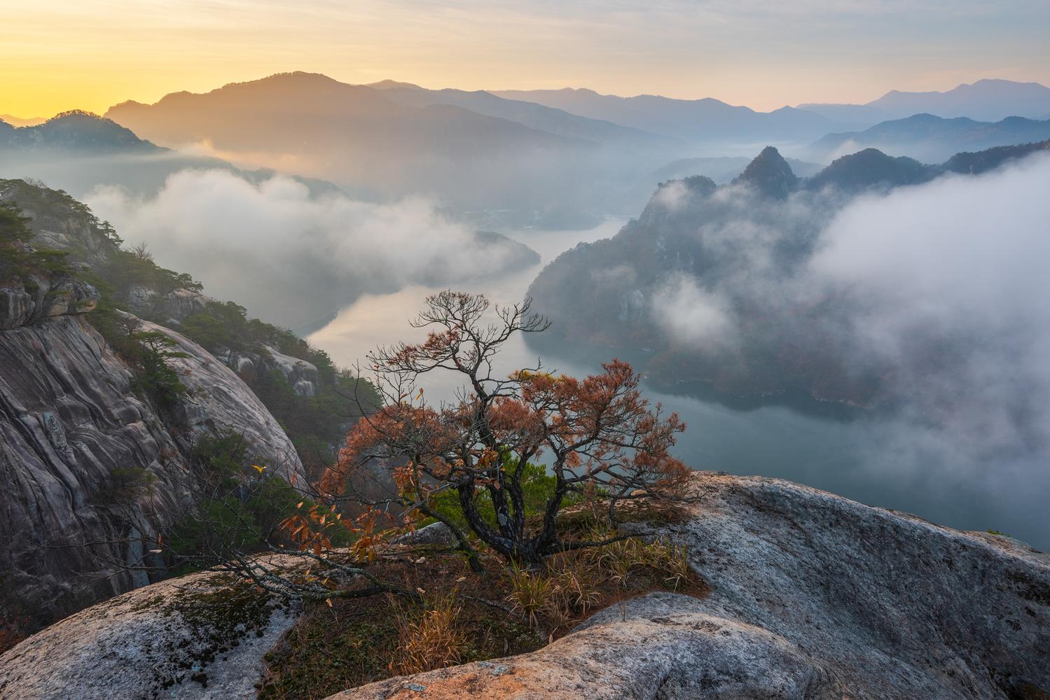The last autumn of the tree by jaeyoun Ryu