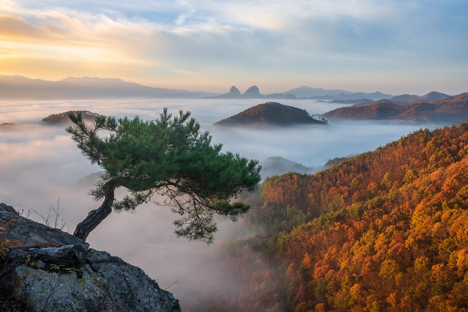 The Last Pine by jaeyoun Ryu