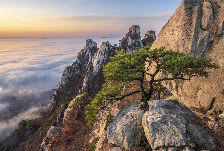 Other Pine Tree Of Dobongsan by jaeyoun Ryu