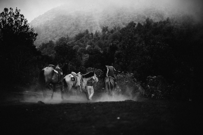 Guatemala Horses by Edward Jose