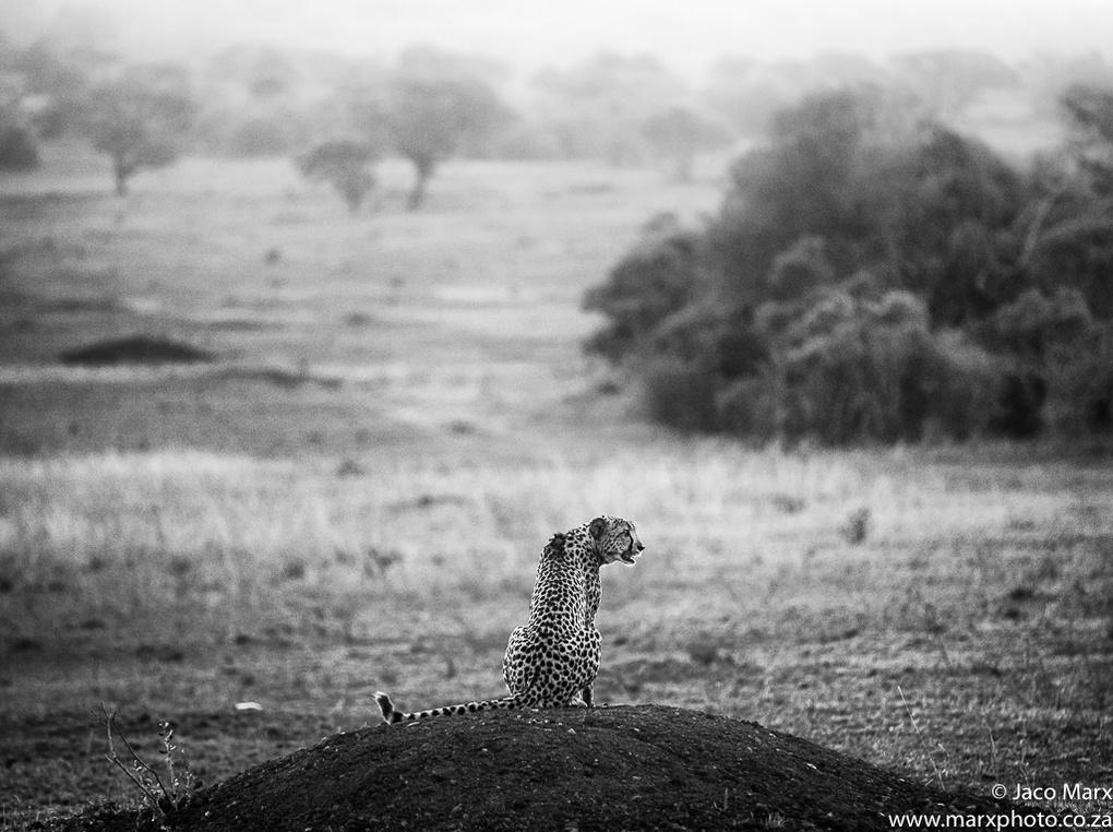 Alone by Jaco Marx