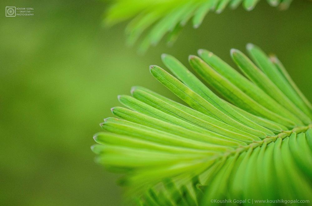 Green by Koushik Gopal Chandrabalu