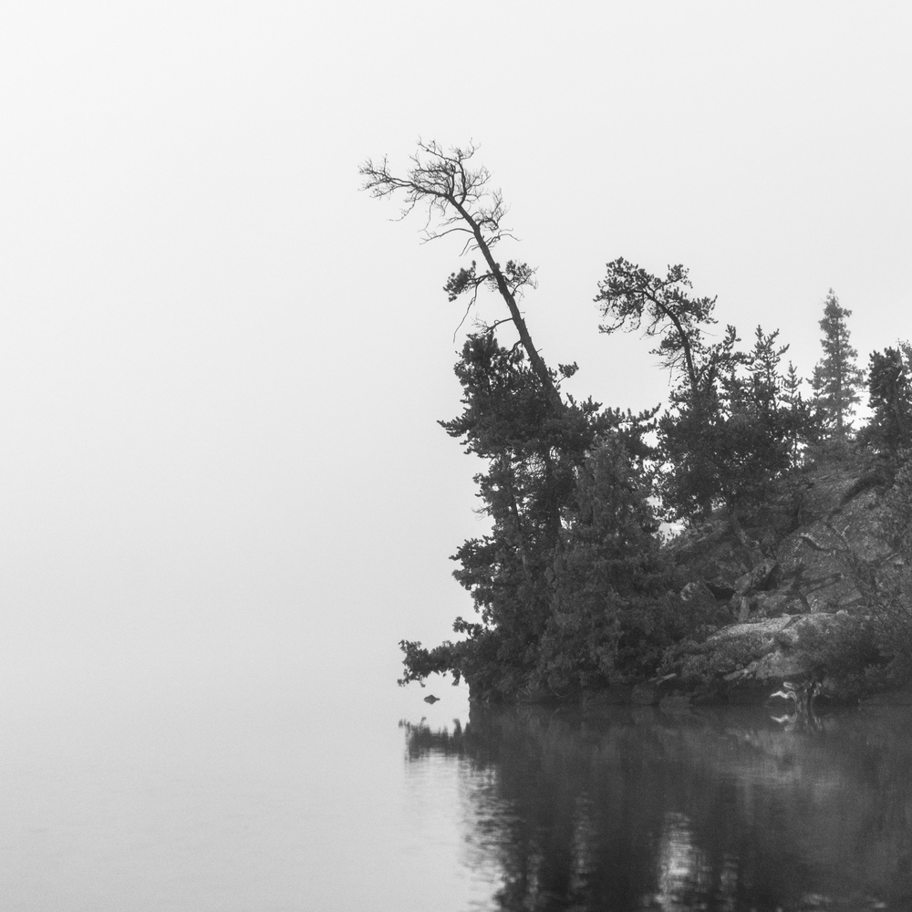 Tree Fog by Jerome Brill