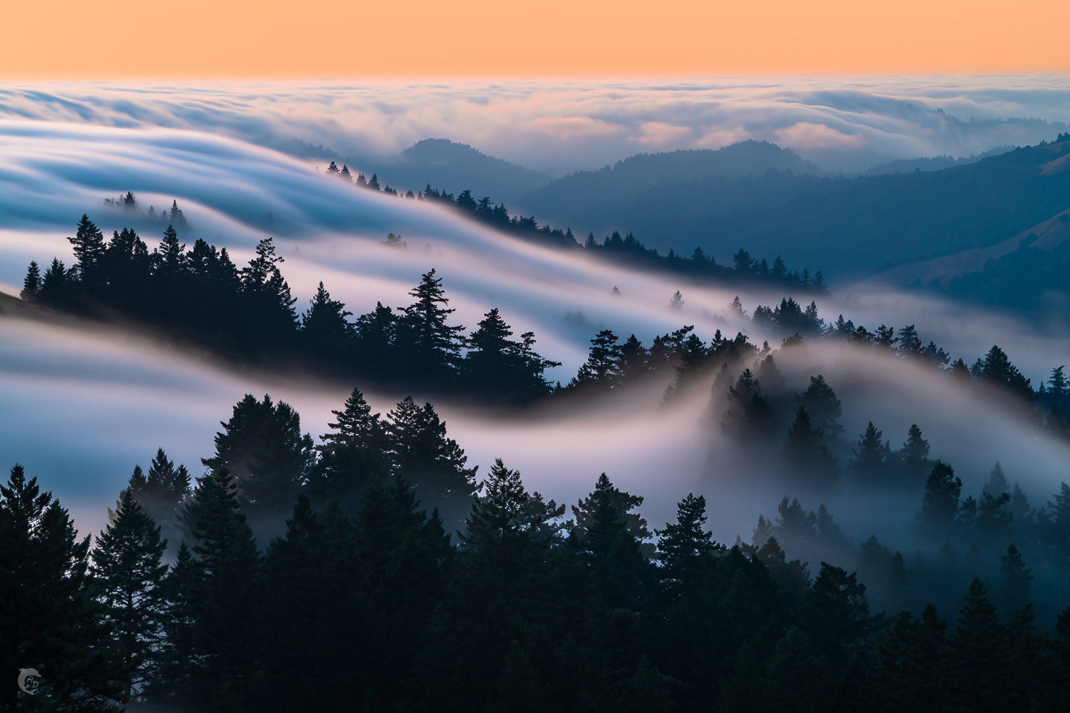 Fog Dreams by Alexander Davidovich