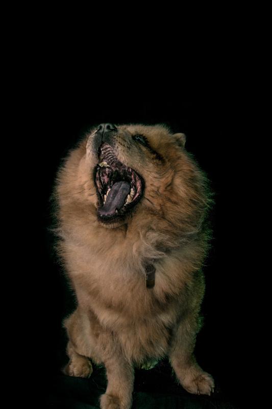 Aslan 2 roar by Austin Hartt