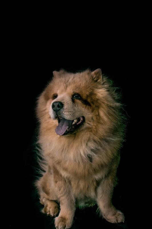 Aslan 1 by Austin Hartt