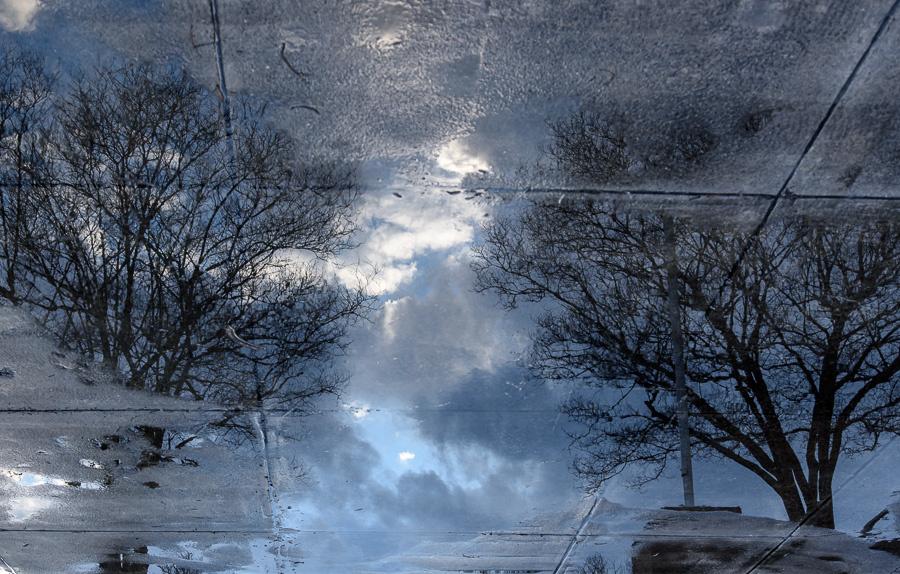 Tree Reflection 1 by John Teague