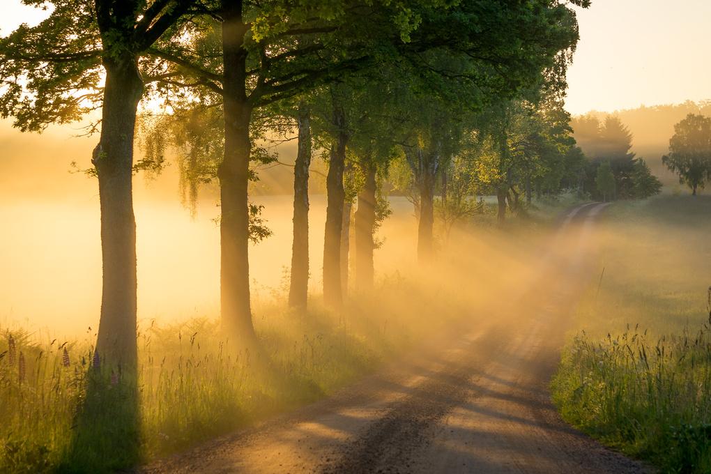 Golden Road by Hugo Hagman
