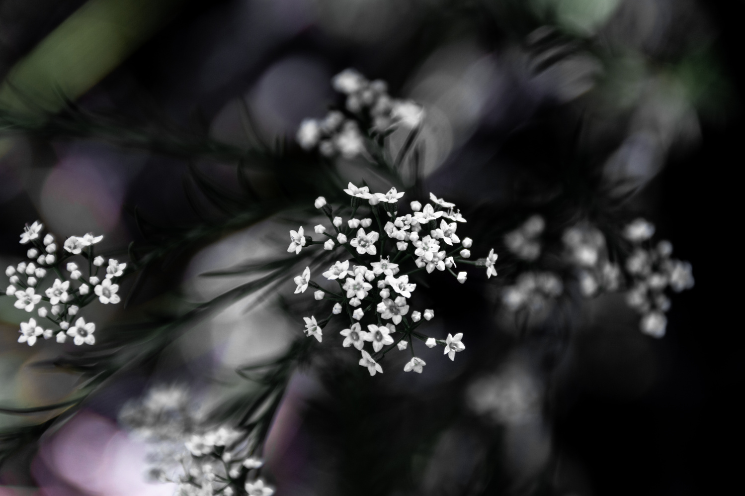 Some flowers on my walk by Jordi Jewell