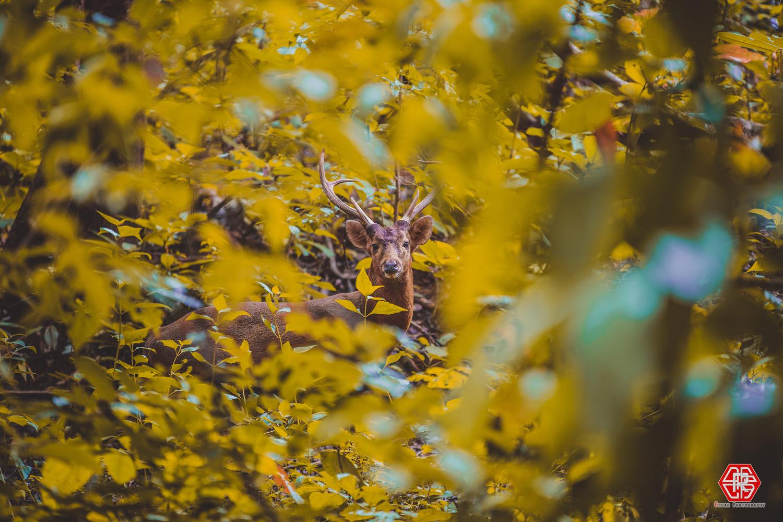 The Deer  by Oscar Kaung