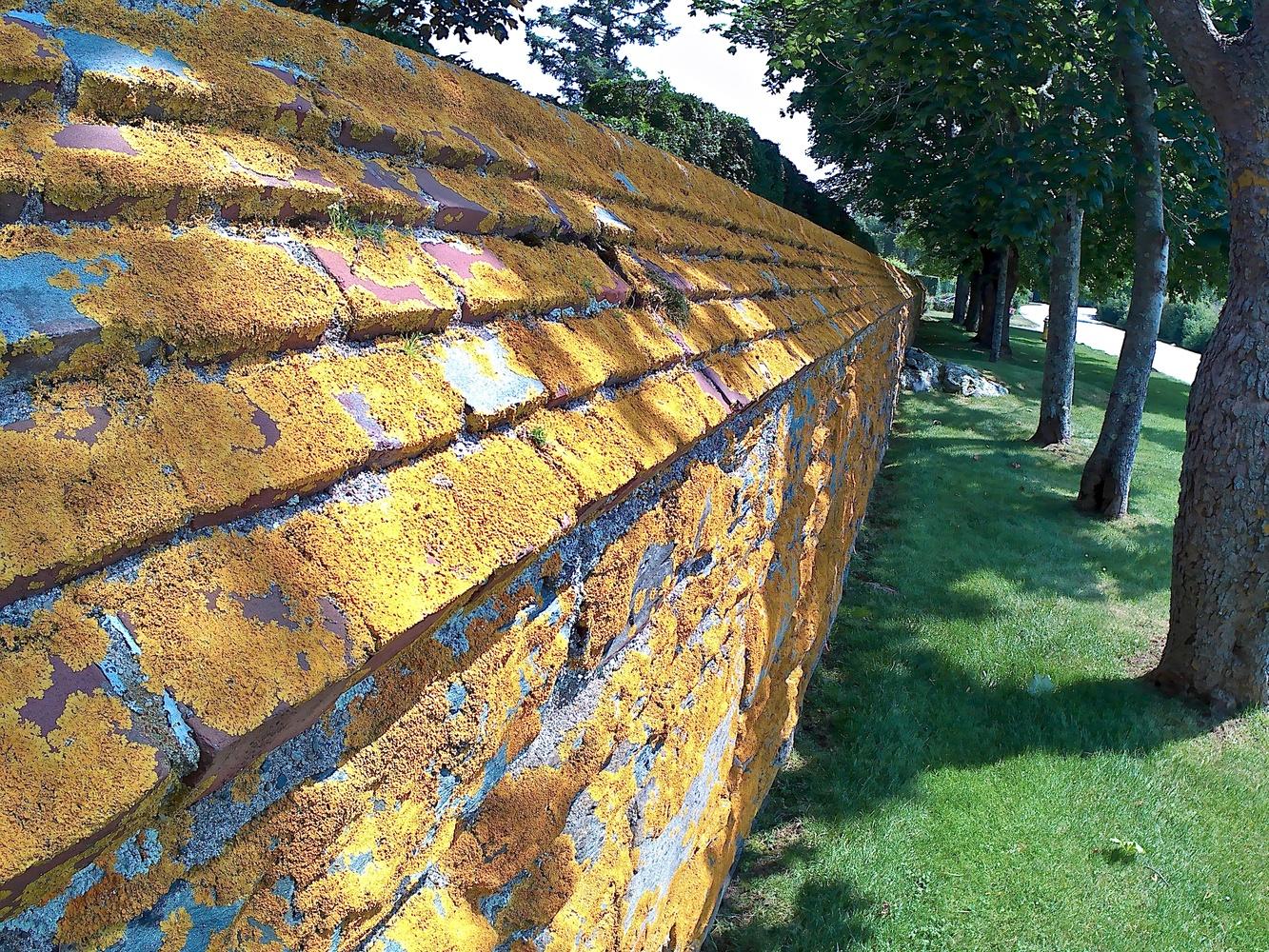 Moss wall by Michael Mascellino
