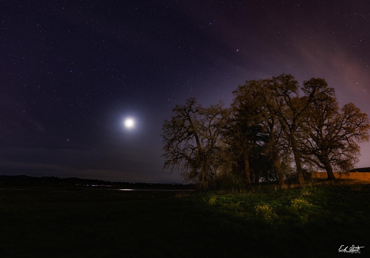 Starlight by Erik Strot