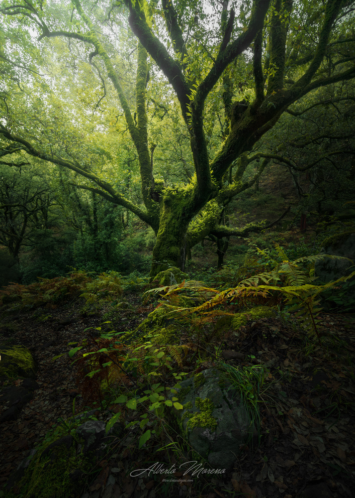 The green forest by Alberto Moreno