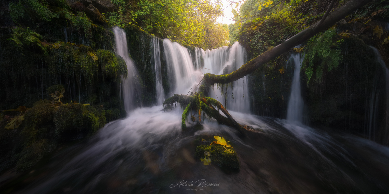 Wet Tree by Alberto Moreno