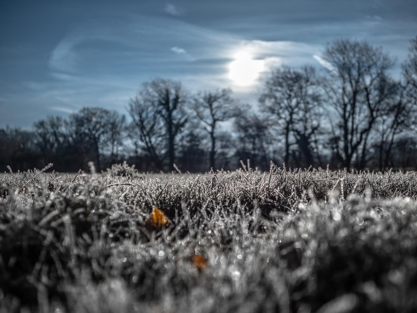 A frosty sunny morning. by Tomasz Kowalski