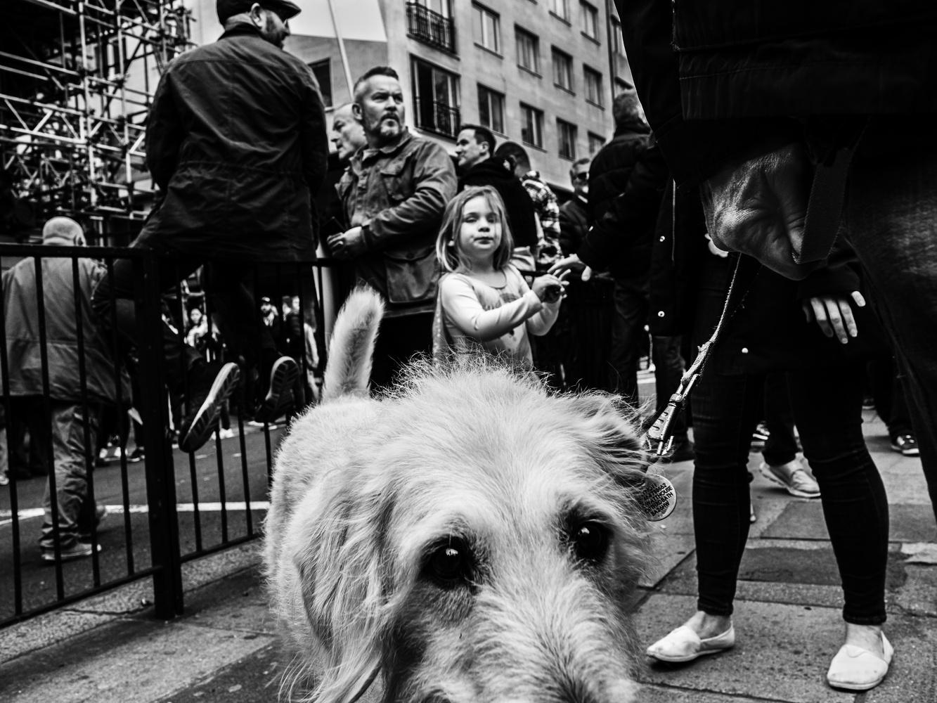 Dog's perspective by Tomasz Kowalski