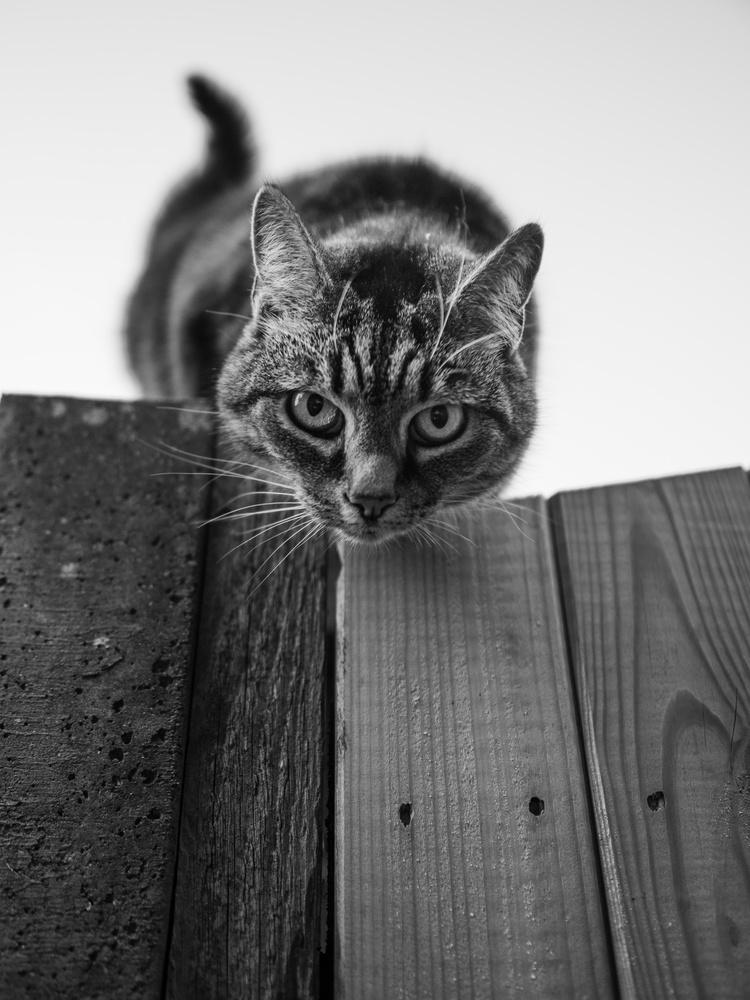 My neighbor's cat by tomas doe