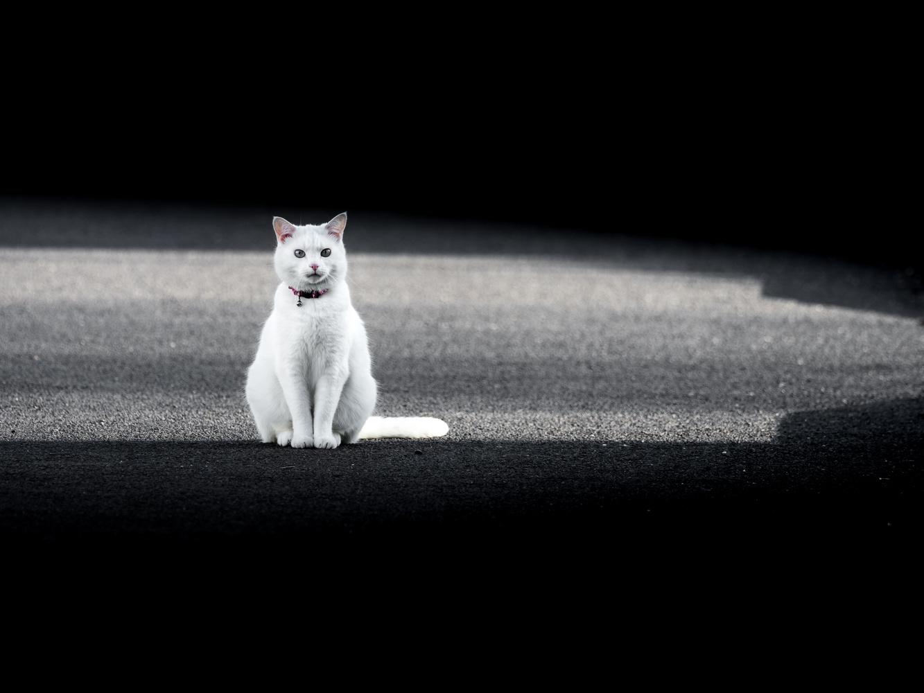 The White Cat by Tomasz Kowalski