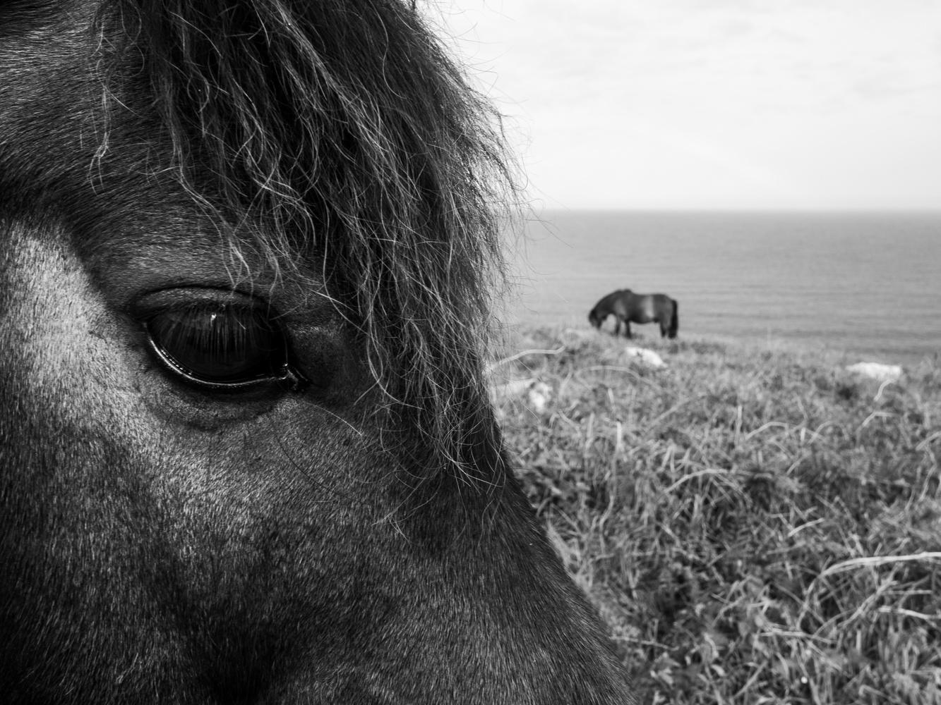 On the coast by Tomasz Kowalski