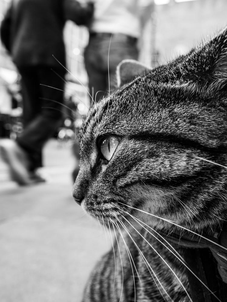 Cat by tomas doe