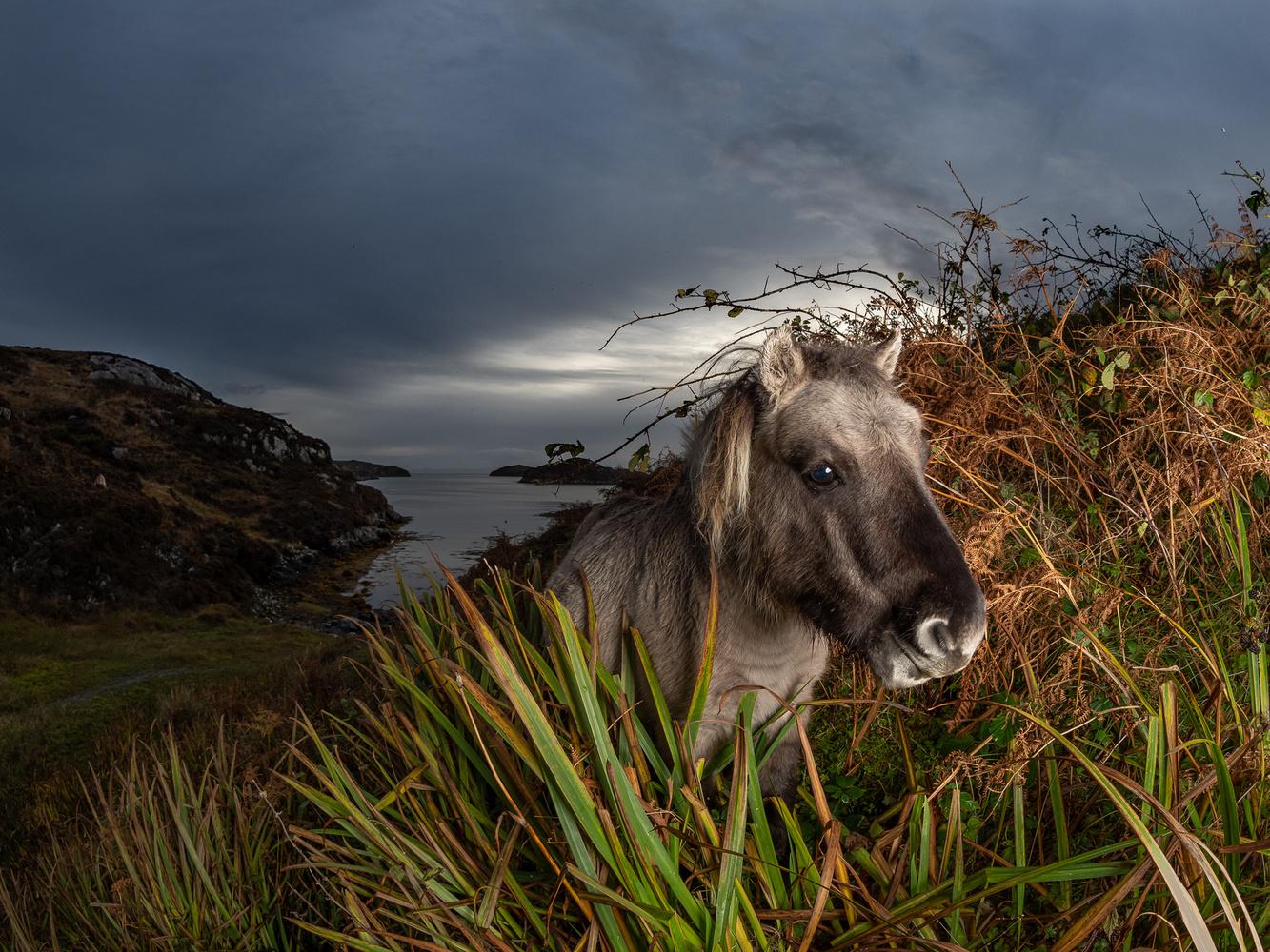 Wild Pony by tomas doe