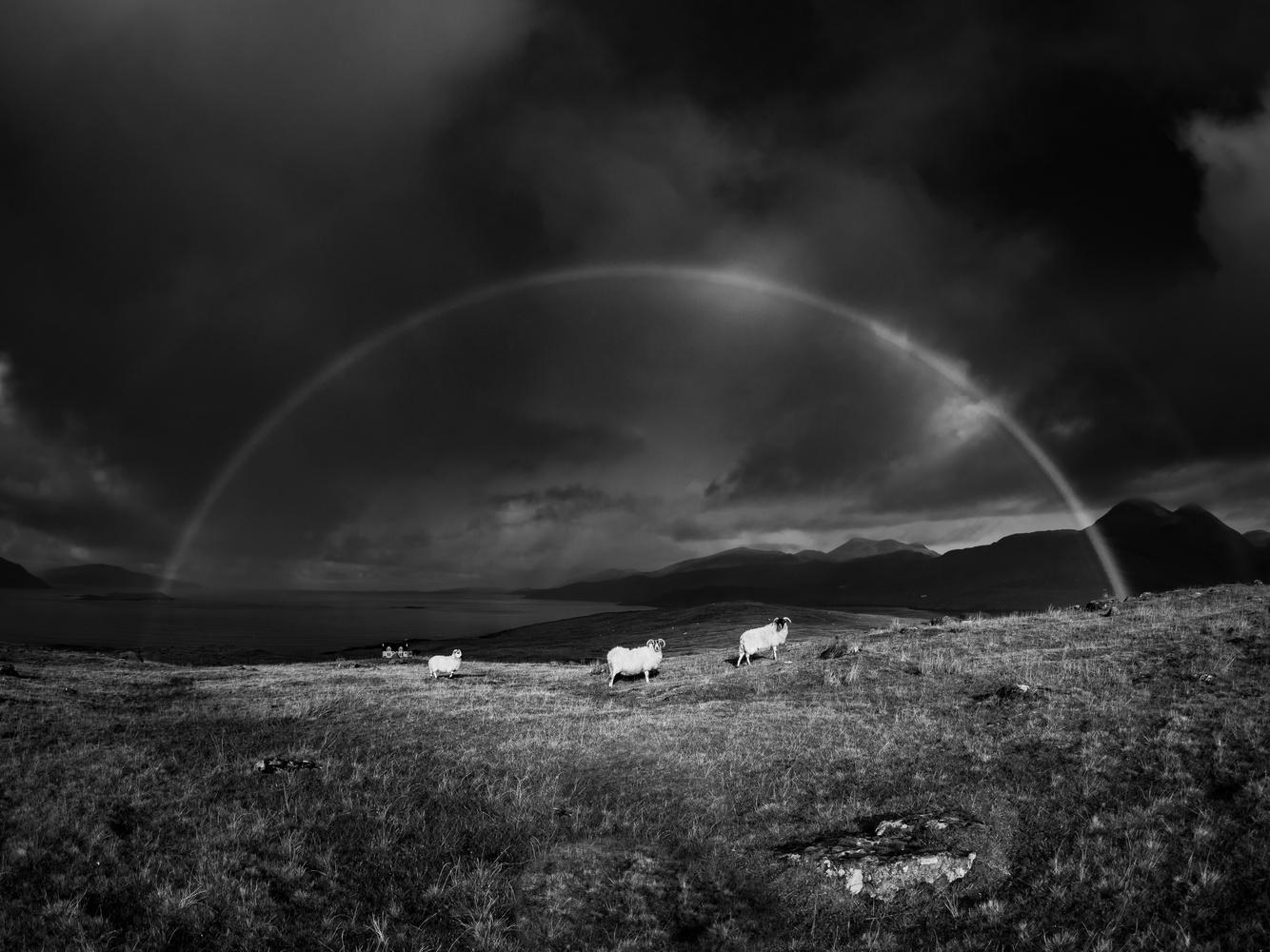 Rainbow by Tomasz Kowalski