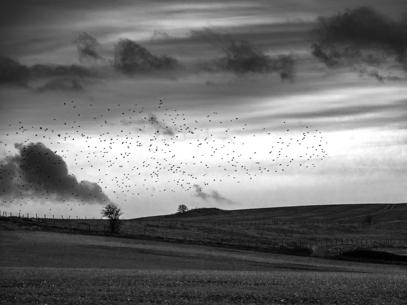 Silence by Tomasz Kowalski