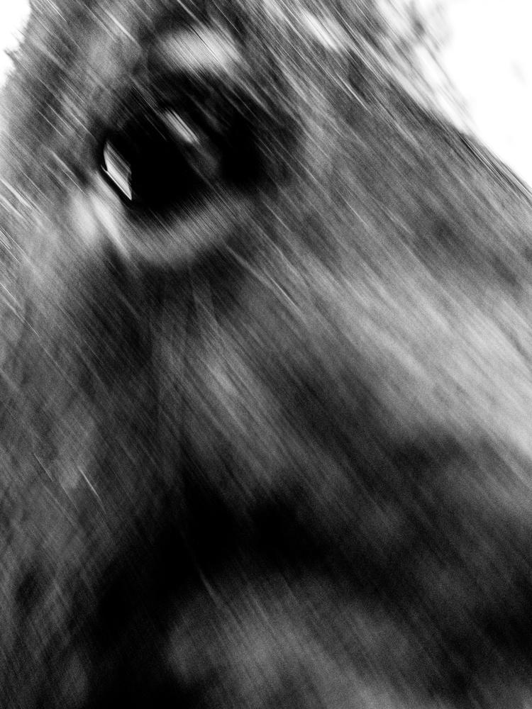 Black Horse by Tomasz Kowalski