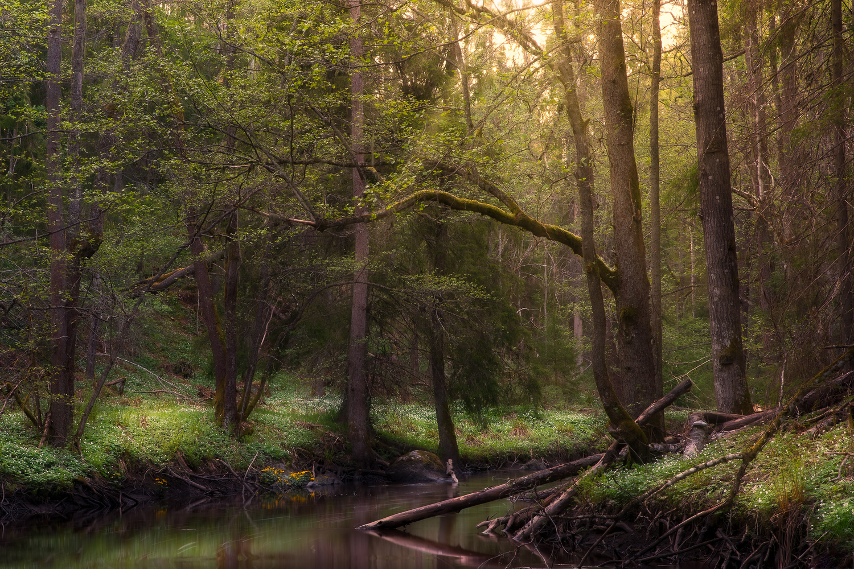 Forest by Johan Lennartsson