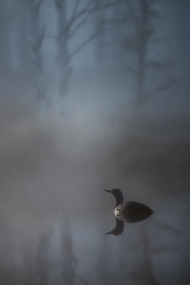 Loon II by Johan Lennartsson