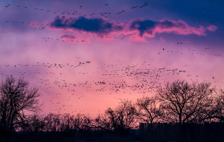 Sandhill Sunset by Ken Hilts
