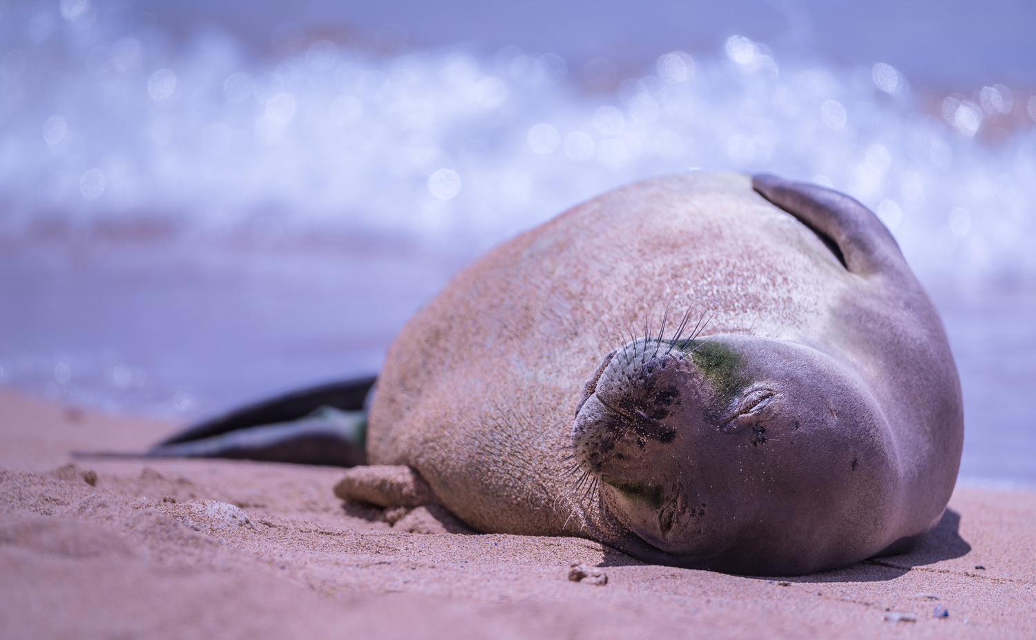 Napping in Paradise by Ken Hilts