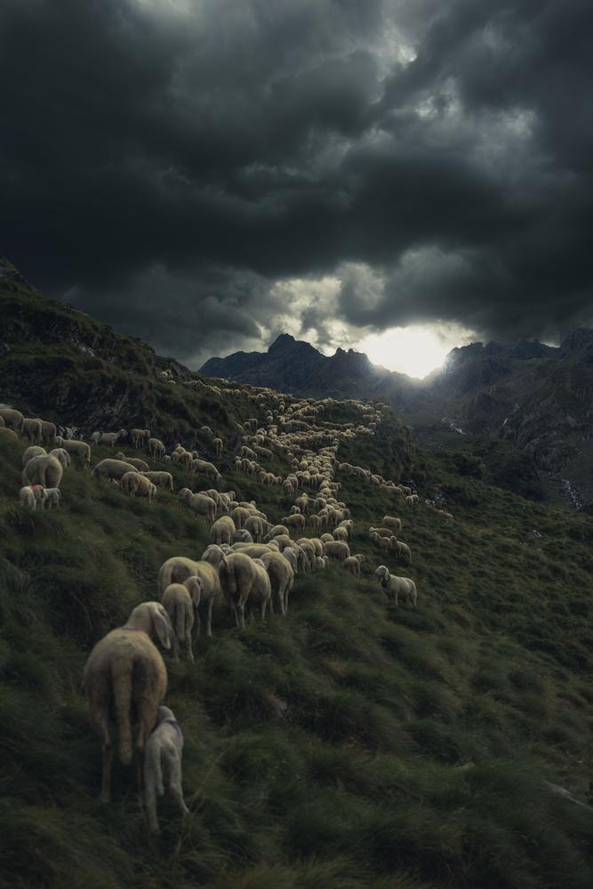 Transhumance uphill by Mauro Scattolini