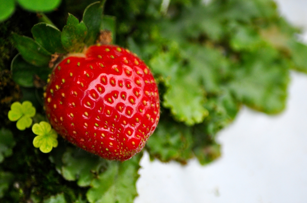 strawberry red and green by Wan Fakhrurozi