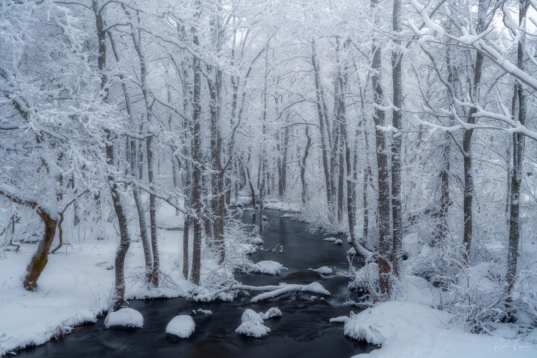 Frozen by Ryota Fukuda