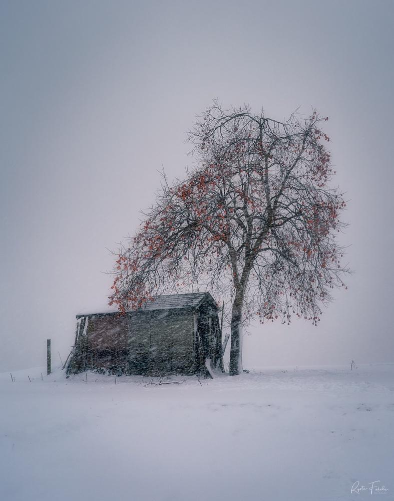 Snow persimmon by Ryota Fukuda