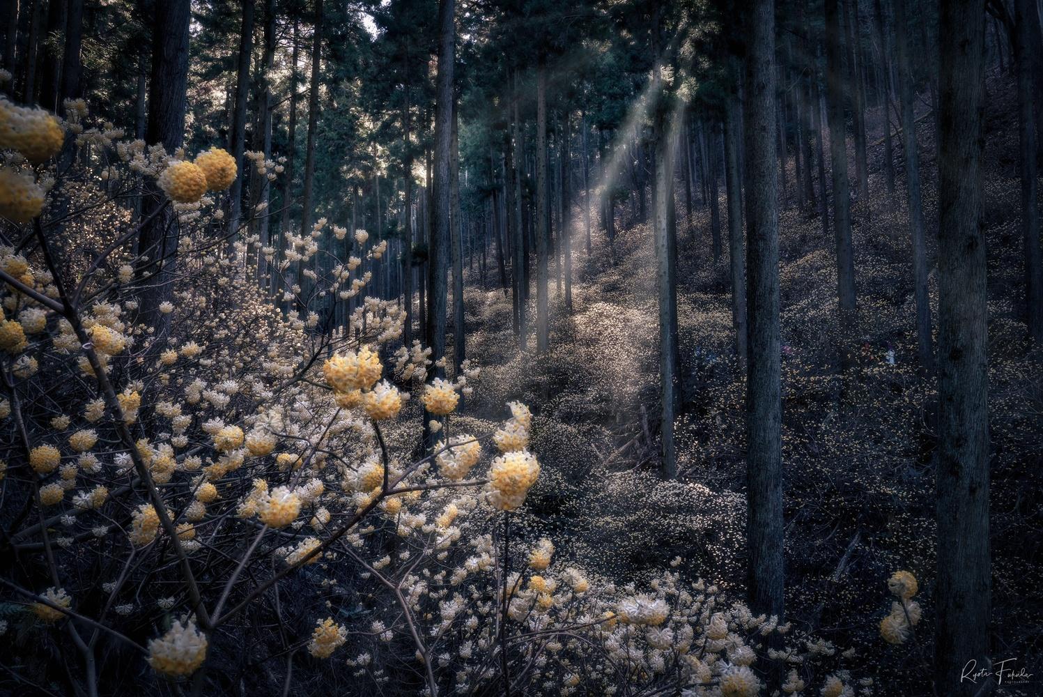 Little flowers by Ryota Fukuda