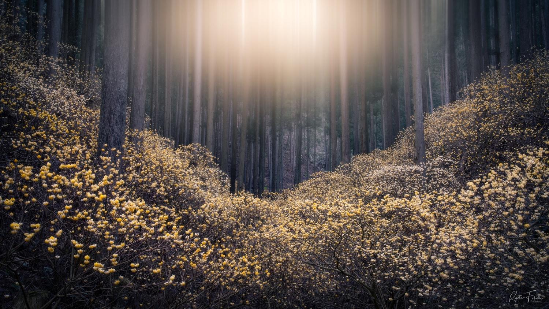 Light by Ryota Fukuda
